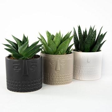 Tris di Succulente con Vaso