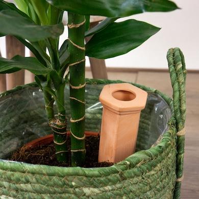 Pack 3 Auto-Irrigazione Terracotta