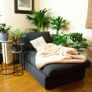 Set Plantas Productivas