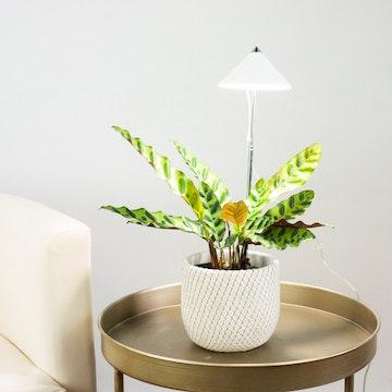 Luz para Crecimiento