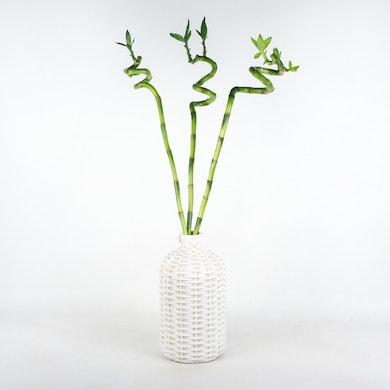 Set Bambù Portafortuna Nordico