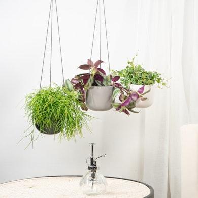 Trio plantes suspendues
