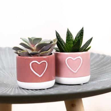 Duo Succulente Valentine