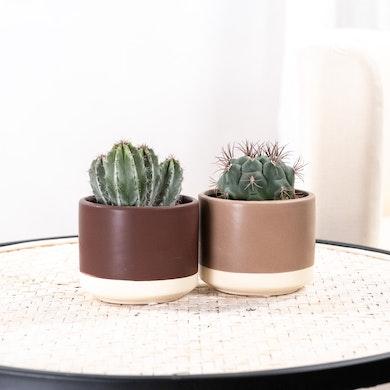 Duo Cactus Rustiques