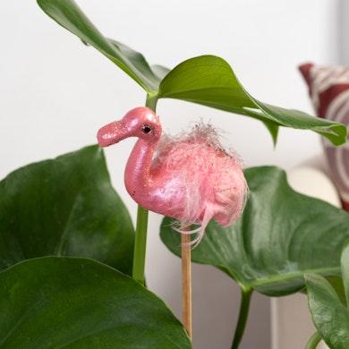 Flamingo Alegre