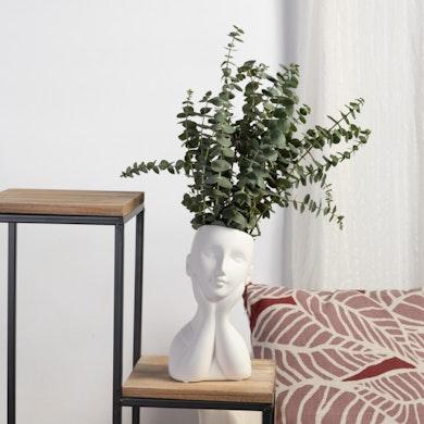 Set Eucalyptus Dreamer