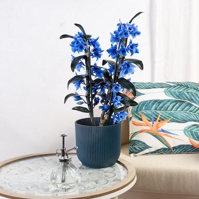 Orchidée Bamboo Bleu