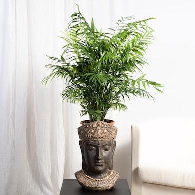Cache-pot Mahakala - L / 19cm