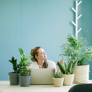 Set Green Desk